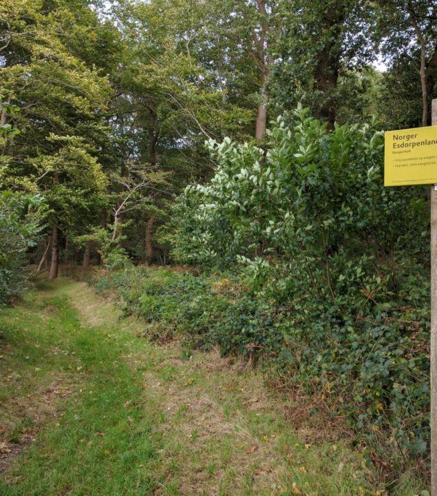 Systematische boomcontrole Natura 2000-gebied Norgerholt